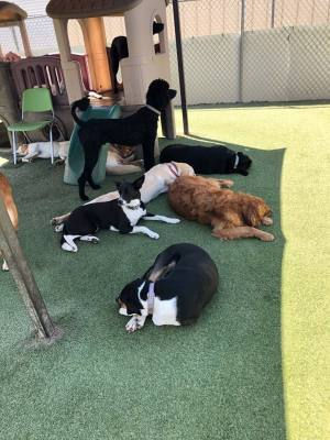 Canine Courtyard opened a second location in Lewisville.