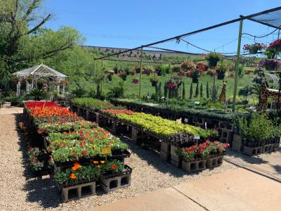 Plants & Planters Nursery specializes in outdoor and indoor plants as well as pottery in varying colors and sizes.