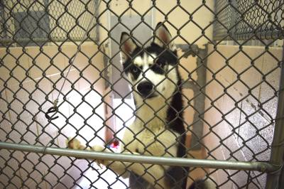 The Collin County Animal Shelter is lowering pet adoption fees from $25 to $10 from May 28-31.