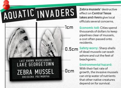 Zebra musselsu2019 destructive effect on Central Texas lakes and rivers give local officials several concerns.