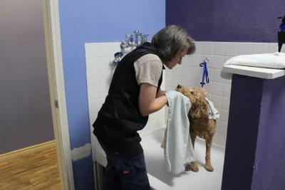 Zen Den Doggie Spa owner Kisu00e9 Segelquist shares a comforting moment with Winnie after bath time.