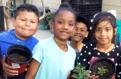 Timberline Elementary students work withnnative plants at the Botanical Gardens.