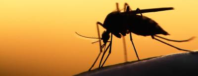 A mosquito sample collected in Keller has tested positive for West Nile virus.