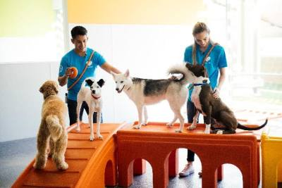 Dogtopia is opening Sept. 30 on Stacy Road in McKinney.