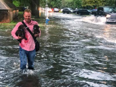 A resident walks two puppies to safety in the Heights.